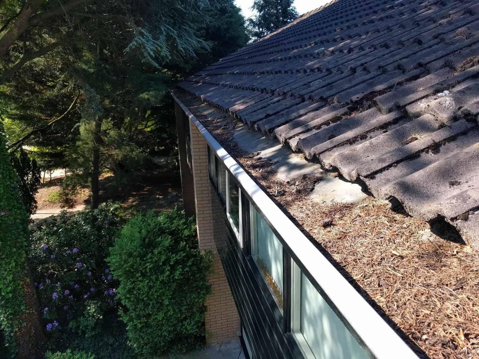 dakgootbescherming-tegen-dennenaalden